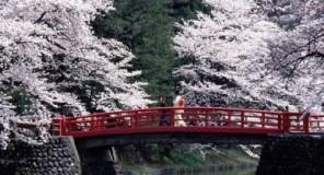 Curiosità dal Giappone : Info sulla vita nel paese del sol levante - Terza Parte