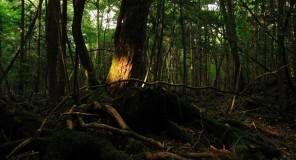 Giappone : Suicidi in calo!
