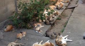 Aoshima : L'isola dei Gatti