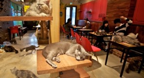 Torino: Il Neko Caffè approda in ITALIA