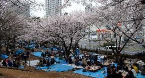 Hanami 2014: Tutti i dettagli