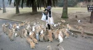Okunoshima: L'isola dei conigli