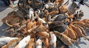 Giappone: Le isole dei Gatti
