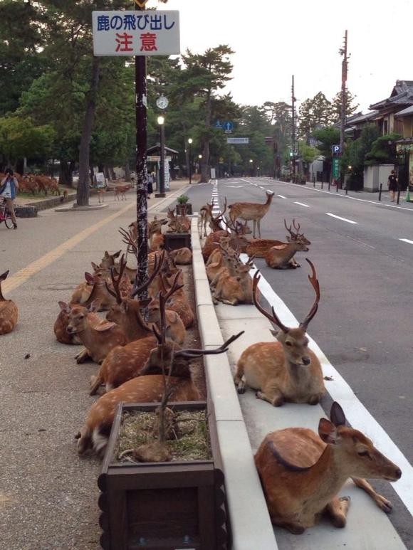 In Giappone Esistono Isole In Cui I Gatti La Fanno Da Padrone E Città Dove  I Cervi Passeggiano Tranquilli Per Le Strade Come Nel Caso Di Nara.