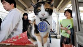 Tama: Il felino capostazione raggiunge la sua ultima fermata