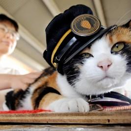 capostazione-gatto-tama-1024x773