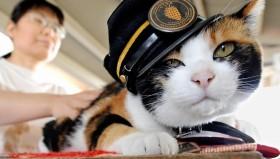 La gatta capostazione entra nella Hall of Fame